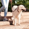 Do You Know How Assistance Dogs Help People with Disabilities?